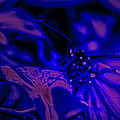 Neon Monarch Macro by Keith Smith