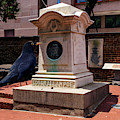 Nevermore Quoth The Raven by Bill Swartwout Photography
