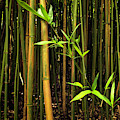 New Bamboo Shoot by Christopher Johnson