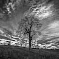 New Day - Bw by Jonathan Hansen