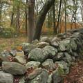 New England Stone Wall 1 by Nancy De Flon
