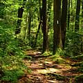 New Hampshire Appalachian Trail by Raymond Salani III