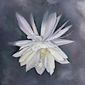 Night Blooming Cereus by Anne Cameron Cutri