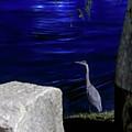 Night Stalker-1 by Charles Hite