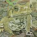 Noble Toad by Mike Nolan