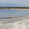 North Shore Of Salton Sea by Colleen Cornelius