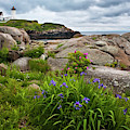 Nubble With Sea Rose And Iris by Harriet Feagin