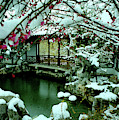 Ny Chinese Scholars Garden, Spring Snow by Anthony Butera