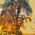 Oak Sunrise by Jonathan Hansen