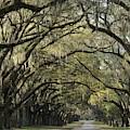 Oak Tree Arch by Bradford Martin