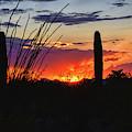 Ocotillo Frames The Sunset by Chance Kafka