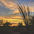 Ocotillo Sunset by Chance Kafka