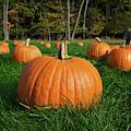 October by Mark Miller