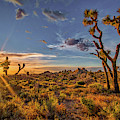 Of Sunstars And Joshua Trees by Peter Tellone