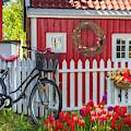 Old Bicycle In The Garden by Debra and Dave Vanderlaan