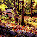 Old Corn Crib In The Woods by Paul W Faust - Impressions of Light