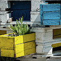 Old Pallet Painted White, Blue And Yellow Used As Flower Pot by Stefan Rotter