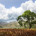 Old Scottish Farmlands Under The Clouds by Debra and Dave Vanderlaan