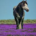 Onaqui Mustang Portrait by Greg Norrell