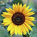 One Bright Sunflower by Carol Groenen