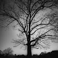 One Tree Silhouette by Doug Camara