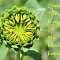 Open The Eyes Of My Heart Lord by Lisa Wooten