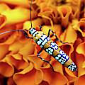 Orange Ailanthus Webworm Moth by Trina Ansel