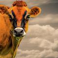 Orange Cow by Bob Orsillo