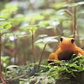 Orange Frog. by Anjo Ten Kate