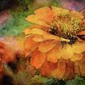 Orange Zinnia 1316 Idp_2 by Steven Ward