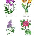 Orchid Tulip Lilac Rose Botanical Watercolor   by Irina Sztukowski