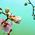 Orchids Out For A Breath Of Fresh Air by Photo By Alan Shapiro