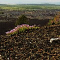 Oregon Lava by Vincent Green