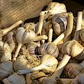 Organic Garlic by Olivier Le Queinec