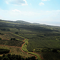 Organic  Plantation Ariel View by Akurtz