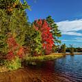 Oswego Lake Pinelands by Louis Dallara