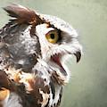 Owl In Profile by Sue Harper