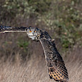 Owl Turning by Mark Hunter