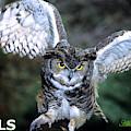 Owls Mascot 2 by Larry Allan