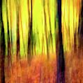 Ozark Autumn Blaze by Harriet Feagin