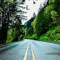 Pacific Northwest Road by Adam Trimble