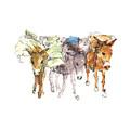 Pack Burro Watercolor Kathleen Mcelwaine by Kathleen McElwaine