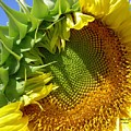 Page 20 In The Book, Peace In The Present Moment. Sunflower Smiling by Michele Penn