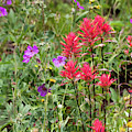Paintbrush And Geranium by Michael Chatt