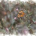 Painted Lady Butterflies In Digital Watercolor by Colleen Cornelius
