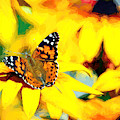 Painted Lady Butterfly Van Gogh by Don Northup