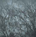 Painted Misty Walk by Bill Posner