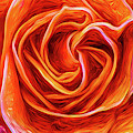 Painted Rose by Onyonet  Photo Studios
