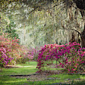 Paintely Garden by Iris Greenwell