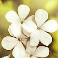 Pale Wildflowers by Jorgo Photography - Wall Art Gallery